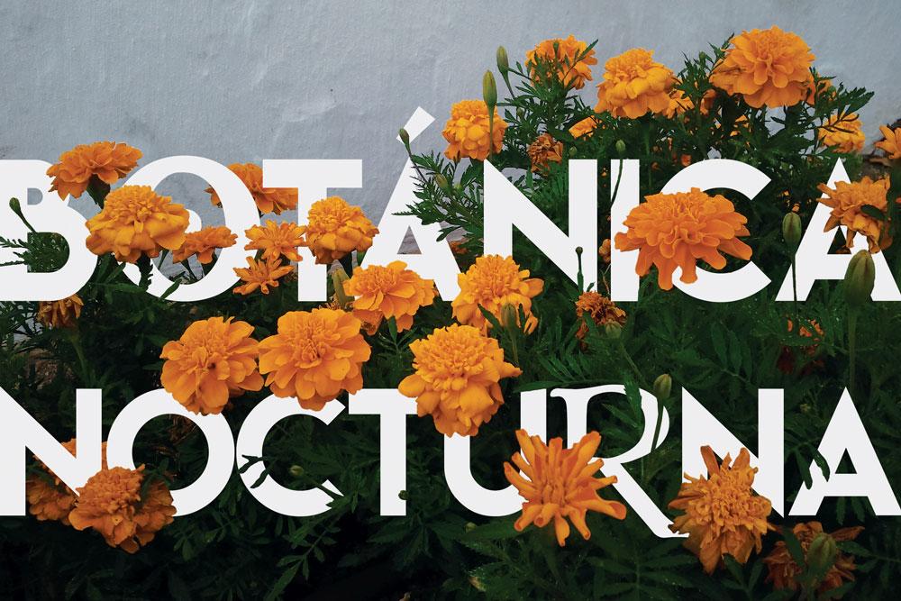 grafico_proy-postal-botanica-nocturna-opcBfinal (2)